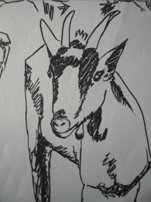 chèvre 1
